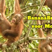 orangutan slider